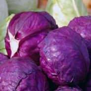 Cabbage Cabeza Negra 3 Red - Appx 250 seeds
